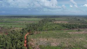 Large-Scale Deforestation at Korea Forest Service's REDD+ Site in Cambodia