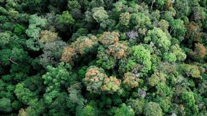 PHSKLU welcomes Selangor's decision to revoke degazettement of Kuala Langat North Forest Reserve (KLNFR)