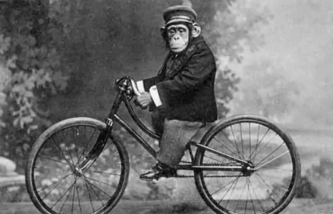 Monyet Penghibur Cirque Du Soleil