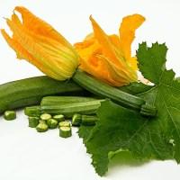 Emerald Delight – Summer Squash Zucchini