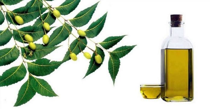 neem & olive oil pack