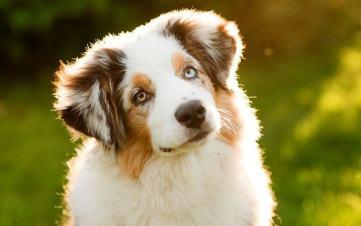 deworming dog
