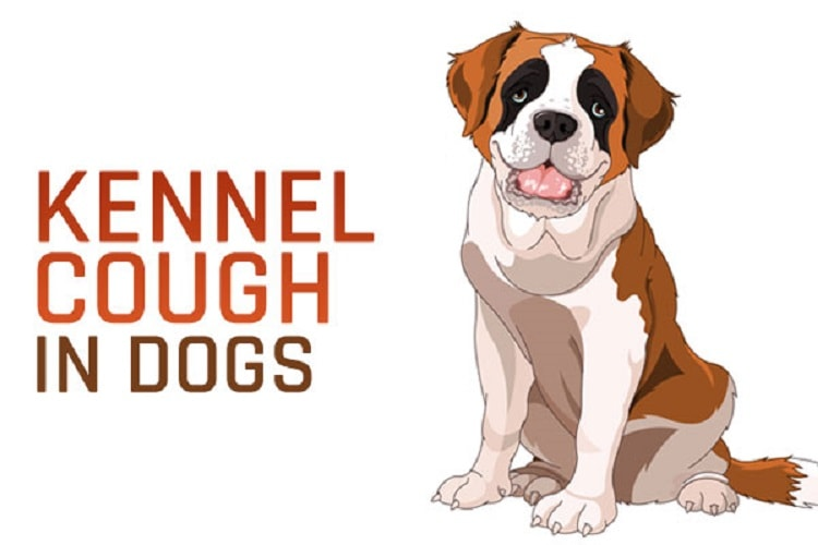 Effective Natural Home Remedies For Kennel Cough