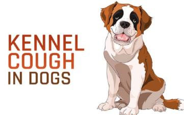 kennel cough remedies