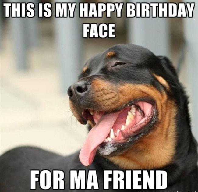 happy bithday dog picture