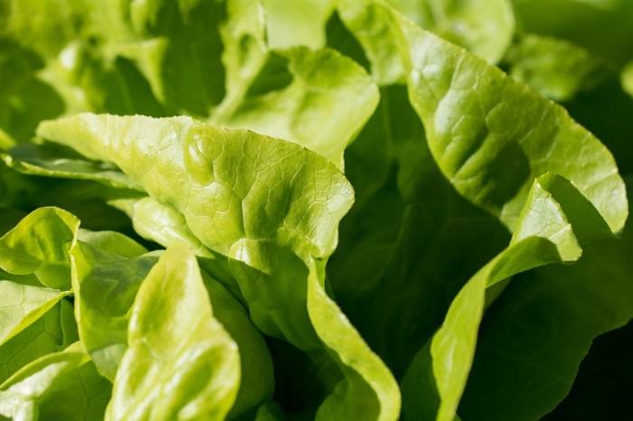 leafy veges