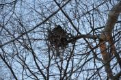 A squirrel's nest.