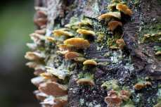 Shelf fungus, lichen and moss on a tree.