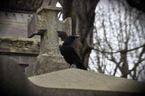 crow_on_grave