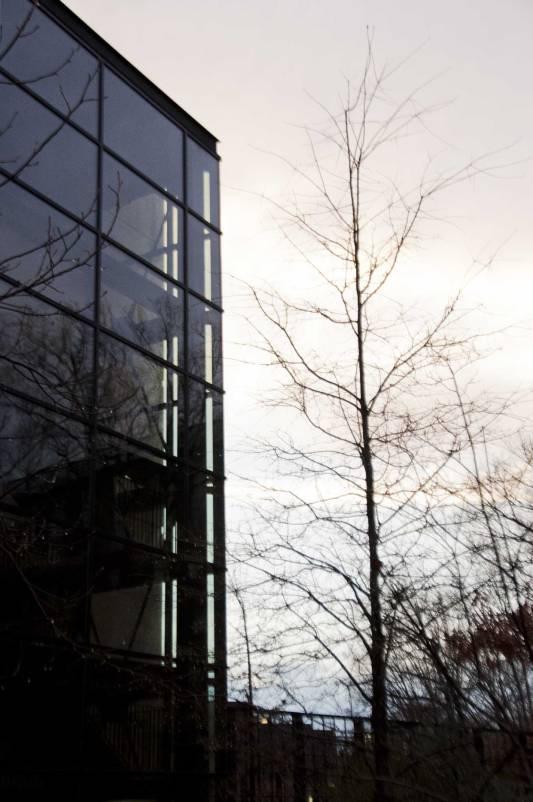 arbre-et-escalier