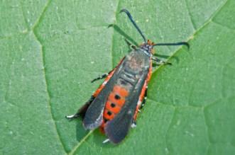 bug_top