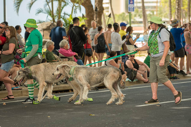 st-patricks-day-parade-honolulu-2019-fokopoint-2087 Honolulu St Patrick's Day Parade 2019
