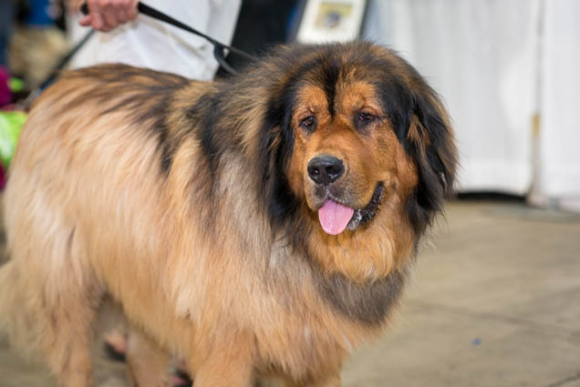hawaii-pet-expo-2019-honolulu-blaisdell-fokopoint-3031 Hawaii Pet Expo 2019