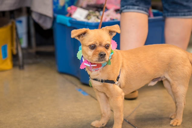 hawaii-pet-expo-2019-honolulu-blaisdell-fokopoint-3034 Hawaii Pet Expo 2019