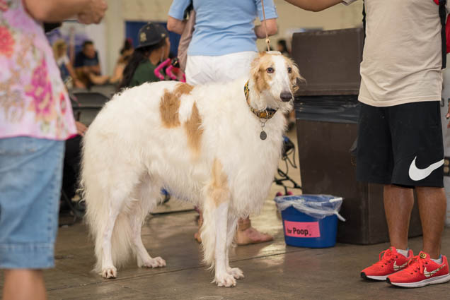 hawaii-pet-expo-2019-honolulu-blaisdell-fokopoint-3037 Hawaii Pet Expo 2019