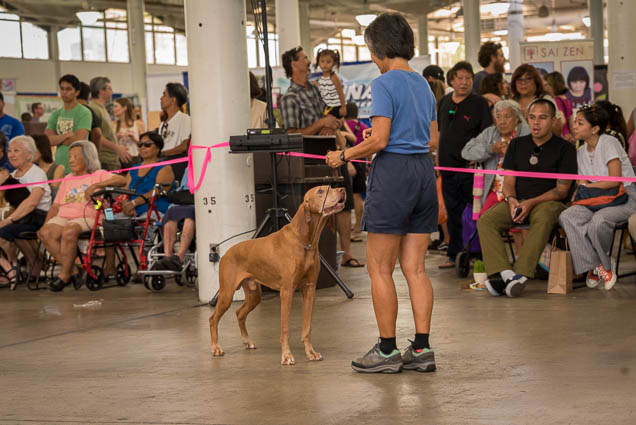 hawaii-pet-expo-2019-honolulu-blaisdell-fokopoint-3080 Hawaii Pet Expo 2019