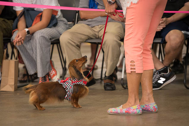hawaii-pet-expo-2019-honolulu-blaisdell-fokopoint-3117 Hawaii Pet Expo 2019