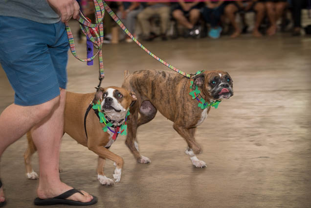hawaii-pet-expo-2019-honolulu-blaisdell-fokopoint-3140 Hawaii Pet Expo 2019