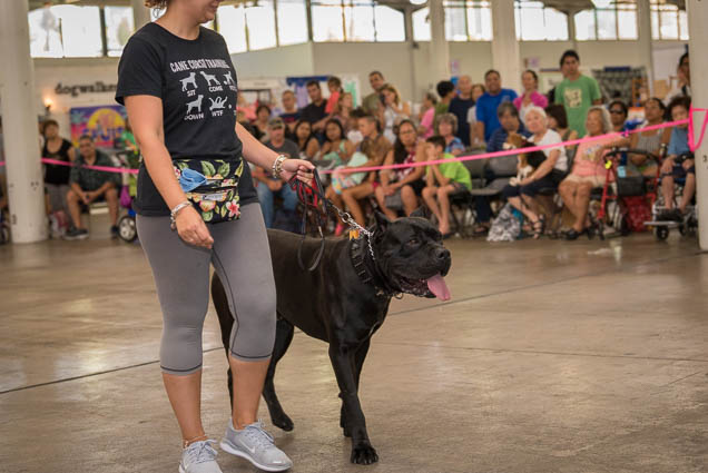 hawaii-pet-expo-2019-honolulu-blaisdell-fokopoint-3143 Hawaii Pet Expo 2019