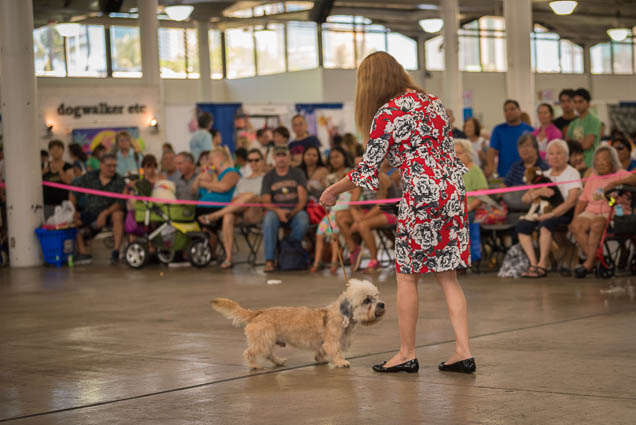 hawaii-pet-expo-2019-honolulu-blaisdell-fokopoint-3203 Hawaii Pet Expo 2019