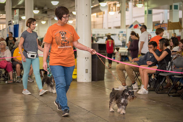 hawaii-pet-expo-2019-honolulu-blaisdell-fokopoint-3213 Hawaii Pet Expo 2019
