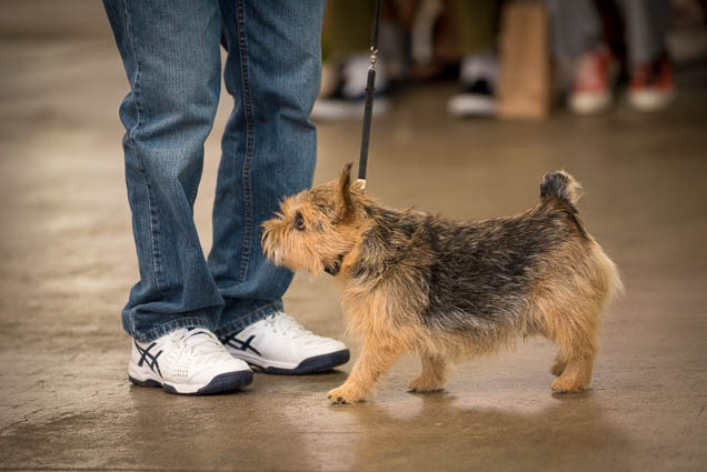 hawaii-pet-expo-2019-honolulu-blaisdell-fokopoint-3222 Hawaii Pet Expo 2019