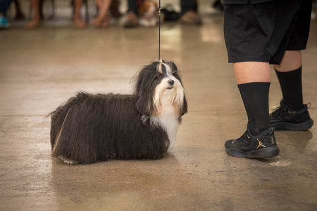 hawaii-pet-expo-2019-honolulu-blaisdell-fokopoint-3254 Hawaii Pet Expo 2019