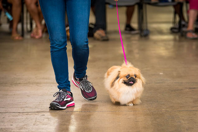 hawaii-pet-expo-2019-honolulu-blaisdell-fokopoint-3289 Hawaii Pet Expo 2019