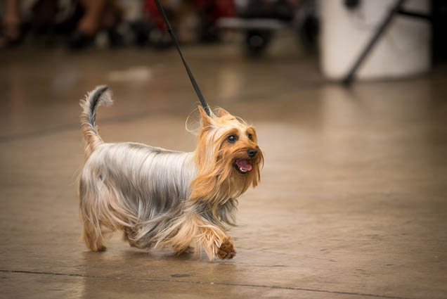 hawaii-pet-expo-2019-honolulu-blaisdell-fokopoint-3312 Hawaii Pet Expo 2019