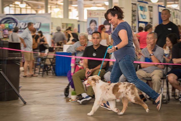 hawaii-pet-expo-2019-honolulu-blaisdell-fokopoint-3382 Hawaii Pet Expo 2019