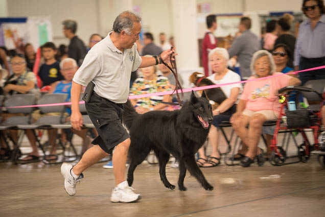 hawaii-pet-expo-2019-honolulu-blaisdell-fokopoint-3401 Hawaii Pet Expo 2019