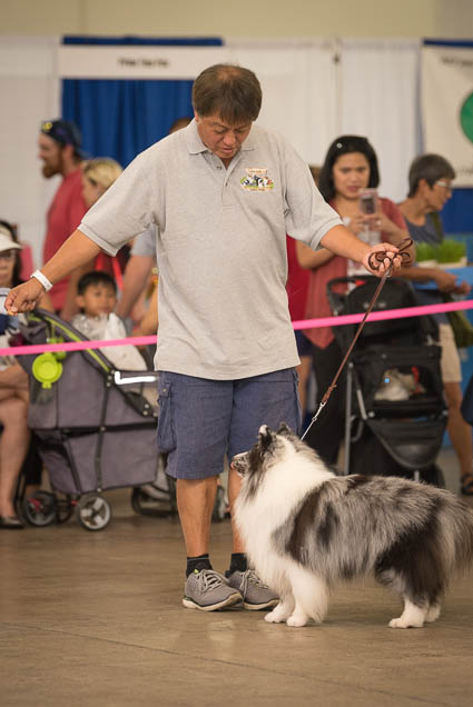 hawaii-pet-expo-2019-honolulu-blaisdell-fokopoint-3450 Hawaii Pet Expo 2019