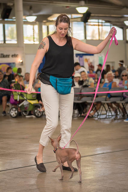 hawaii-pet-expo-2019-honolulu-blaisdell-fokopoint-3461 Hawaii Pet Expo 2019