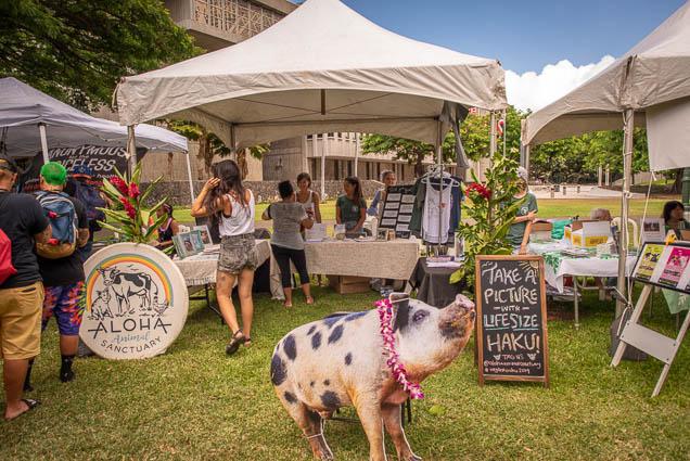 aloha-animal-sanctuary-haku-vegfest-oahu-fokopoint VegFest Oahu 2019