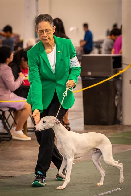 hawaiian-kennel-club-dog-show-2019-blaisdell-honolulu-fokopoint-7068 Hawaiian Kennel Club Dog Show 2019