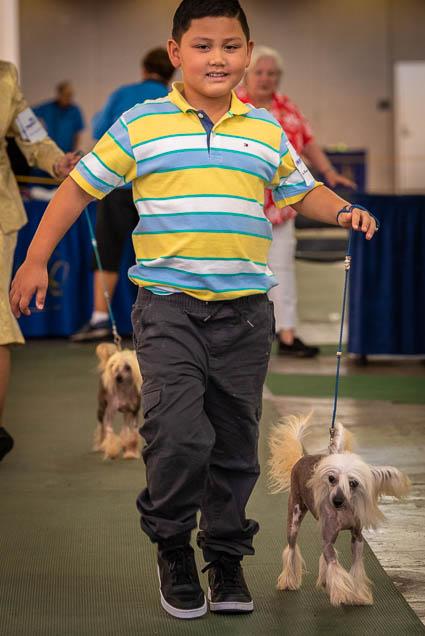 hawaiian-kennel-club-dog-show-2019-blaisdell-honolulu-fokopoint-7077 Hawaiian Kennel Club Dog Show 2019