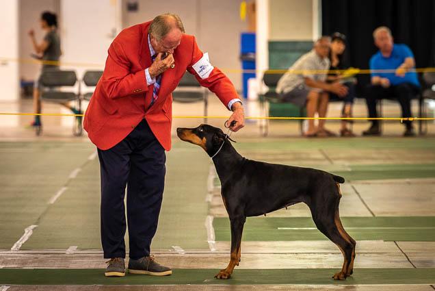 hawaiian-kennel-club-dog-show-2019-blaisdell-honolulu-fokopoint-7093 Hawaiian Kennel Club Dog Show 2019