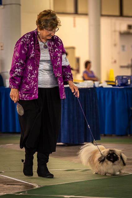 hawaiian-kennel-club-dog-show-2019-blaisdell-honolulu-fokopoint-7105 Hawaiian Kennel Club Dog Show 2019