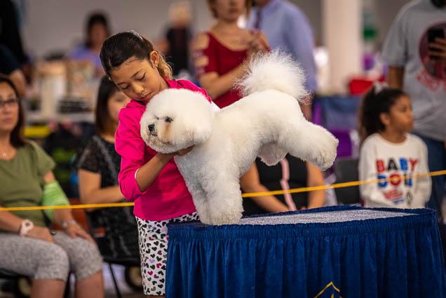 hawaiian-kennel-club-dog-show-2019-blaisdell-honolulu-fokopoint-7185 Hawaiian Kennel Club Dog Show 2019