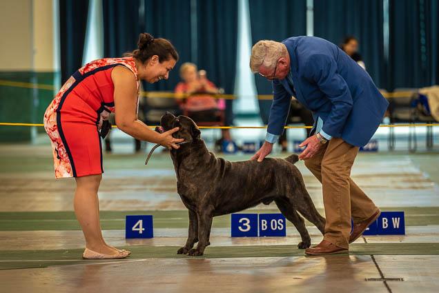 hawaiian-kennel-club-dog-show-2019-blaisdell-honolulu-fokopoint-7233-1 Hawaiian Kennel Club Dog Show 2019