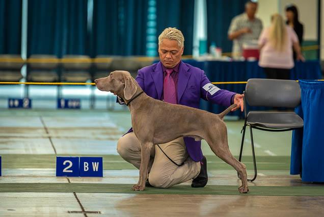 hawaiian-kennel-club-dog-show-2019-blaisdell-honolulu-fokopoint-7261 Hawaiian Kennel Club Dog Show 2019