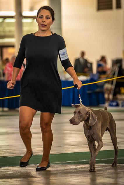 hawaiian-kennel-club-dog-show-2019-blaisdell-honolulu-fokopoint-7265 Hawaiian Kennel Club Dog Show 2019