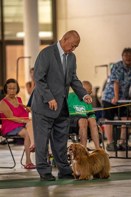 hawaiian-kennel-club-dog-show-2019-blaisdell-honolulu-fokopoint-7306 Hawaiian Kennel Club Dog Show 2019