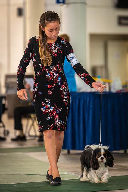 hawaiian-kennel-club-dog-show-2019-blaisdell-honolulu-fokopoint-7484 Hawaiian Kennel Club Dog Show 2019