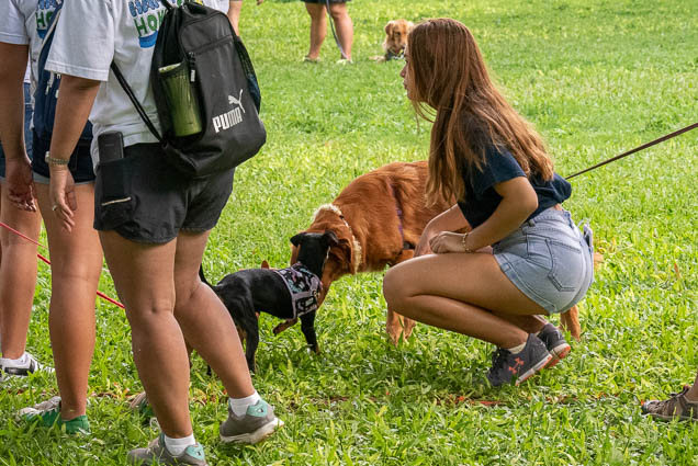 dogs-namiwalks-hawaii-honolulu-2019-fokopoint-0978 NamiWalks Oahu at Civic Grounds