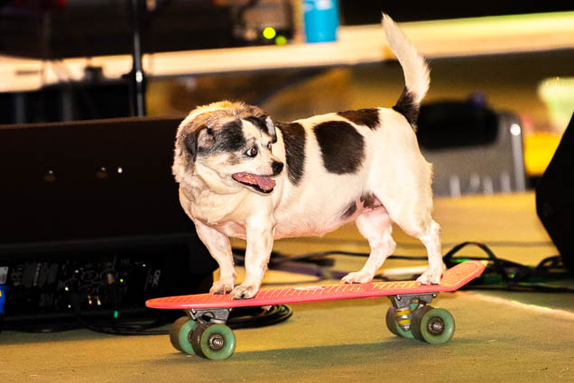 skateboard-dog-petblock-paina-honolulu-2019-fokopoint-1783 PetBlock Paina at Victoria Ward Park