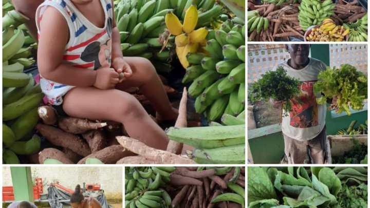 Chapada: Em ato de solidariedade contra o COVID-19, MST doa cerca de 12 toneladas de alimentos na Chapada Diamantina