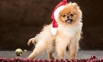Como evitar acidentes comuns com pets no fim de ano