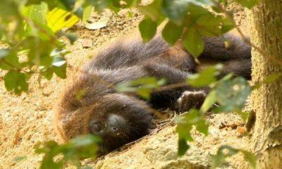Sesa registra morte de macaco por febre amarela na divisa com o litoral