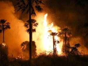 Read more about the article União vai liberar aeronaves e recursos para reforçar combate ao fogo em MS